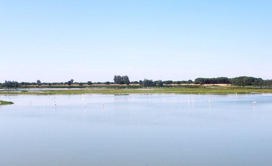 Direct Seguros - Parque Nacional de Doñana