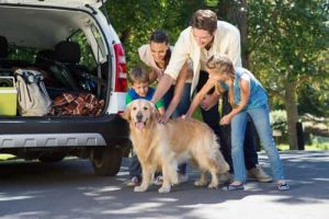 Consejos Semana Santa Viajar Mascota Direct Seguros